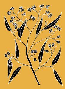 Bloodwood  - Eucalyptus polycarpa - Ivos Art