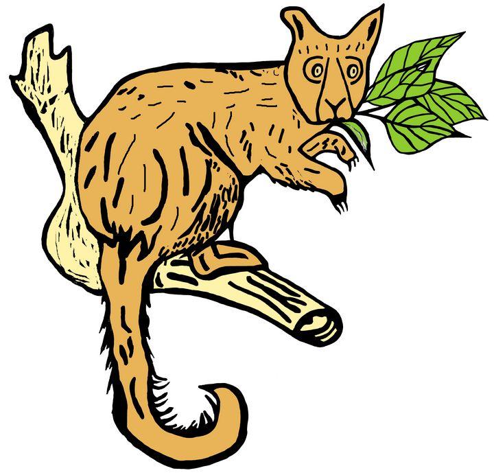 Australian Possum - Ivos Art
