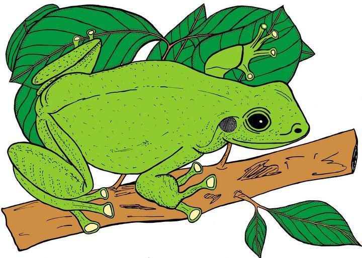 Green Tree Frog - Ivos Art