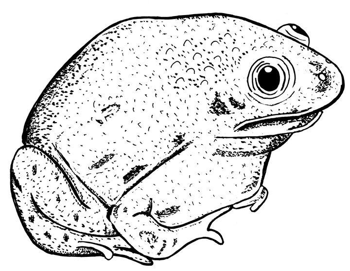Trilling Frog - Ivos Art