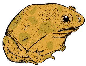 Trilling Frog
