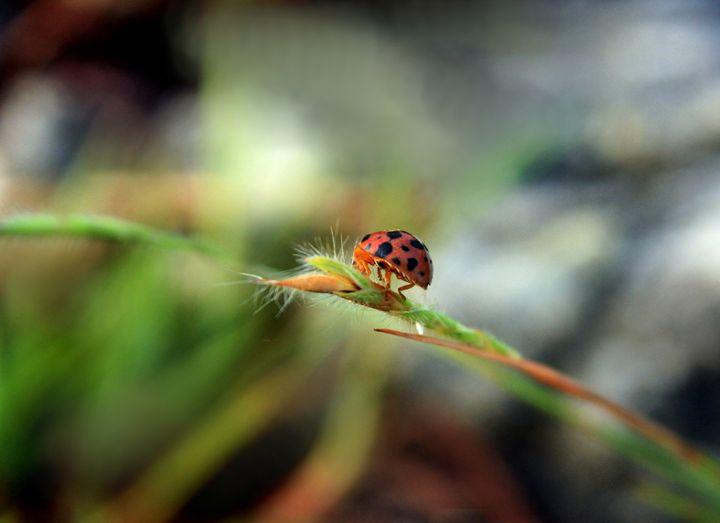 The Bug - Yulianto Hiu