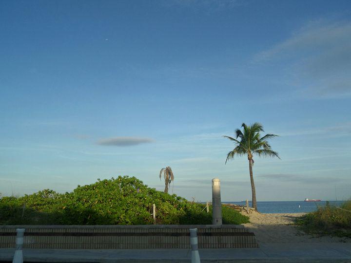 Solitary Palm Tree - Jamie Cuc