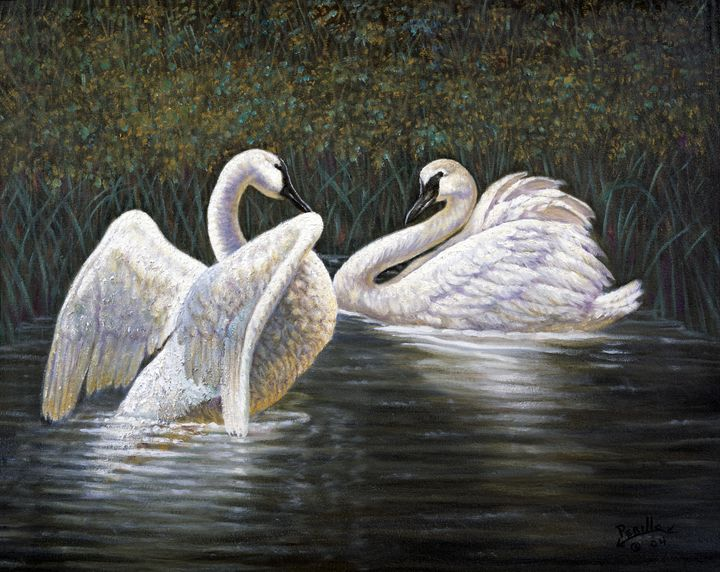 Enjoying The Trumpeter Swans - Gregory Perillo