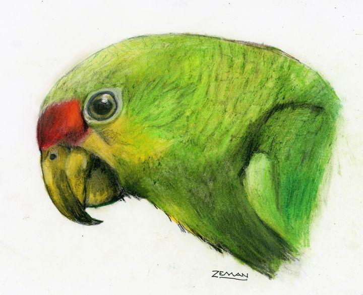 Green Parrot - Ron Zeman