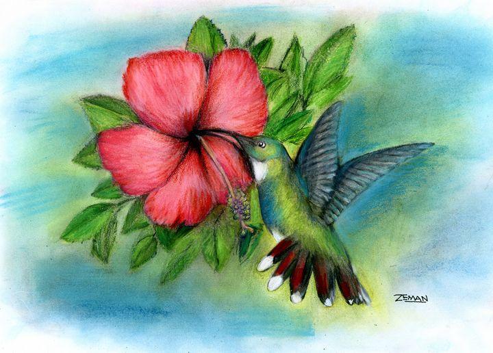 Hummingbird Hibiscus - Ron Zeman
