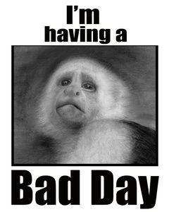 Bad day monkey