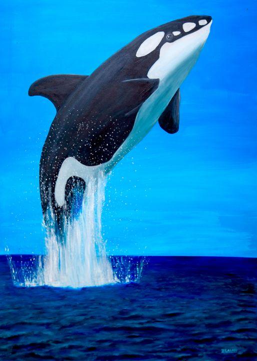 Orca breaching - Ron Zeman