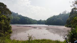 Lake with Pink flower cover