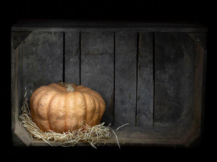 Acorn aka winter squash in a box. - Judith Flacke Still Life