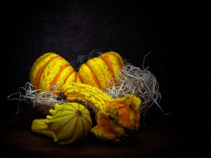 Ornamental squashes - Judith Flacke Still Life