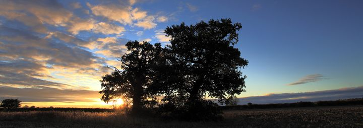 Sunrise over Oak Tree Fenland - Dave Porter Landscape Photography