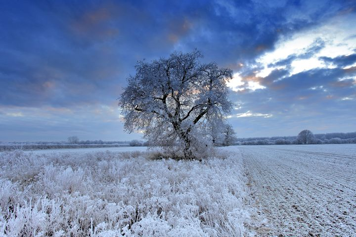 Hoare frost winter tree Fenland - Dave Porter Landscape Photography