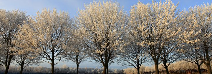 Hoare frost winter sunset - Dave Porter Landscape Photography