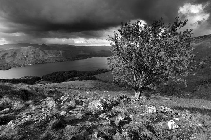 Rowan Tree Ashness fell - Dave Porter Landscape Photography