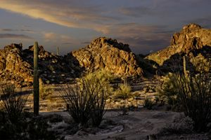 Southern & Central Arizona Landscape
