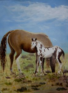 0207-0249 Wild Foal