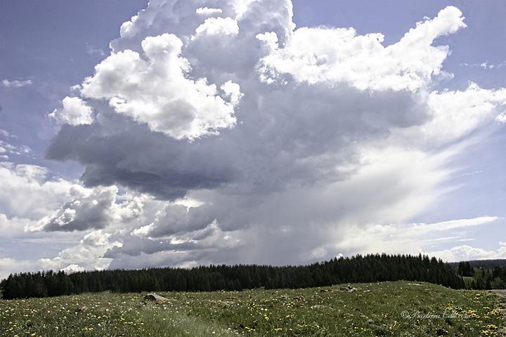 Summer Storm in Colorado - Barbara Odle Fine Art
