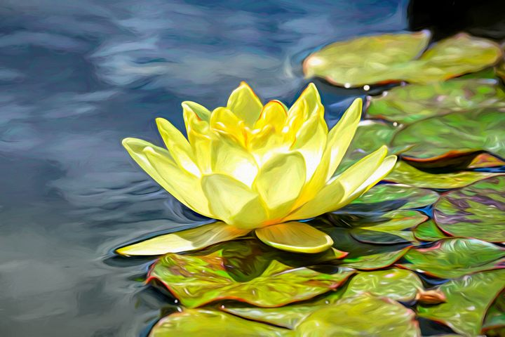 The Water Lily - Diana Penn Artography