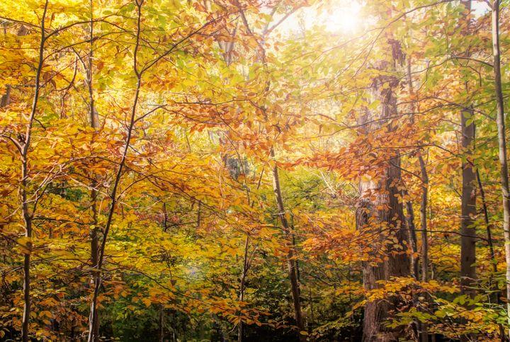 Fall in the Sun - Diana Penn Artography