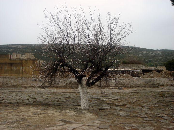 Lone Tree - Photograph, Prints, and Digital Art, Paintings