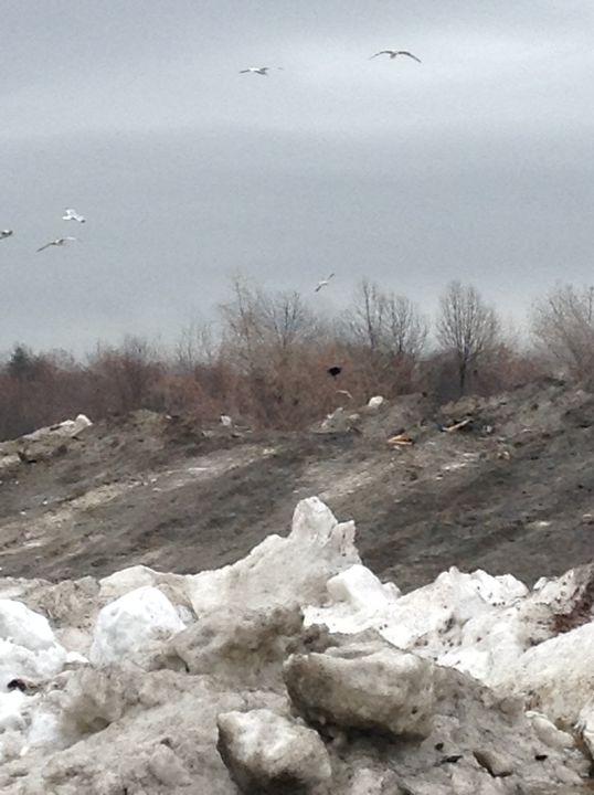Mound of Dark Snow - Natural Wonders