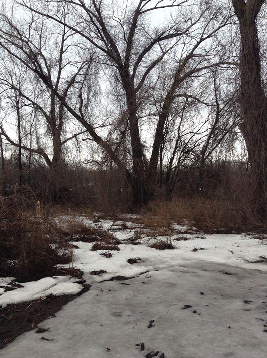 Trees on Ice - Natural Wonders