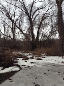 Trees on Ice