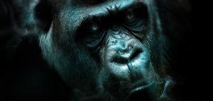 Art -- Angry Gorilla