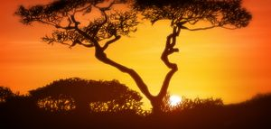 Art — Incredible Africa