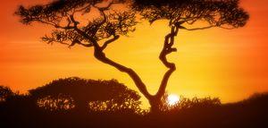 Art — Incredible Africa