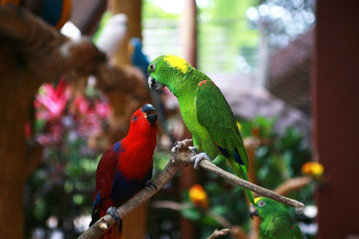 Parrots - Through My Eyes