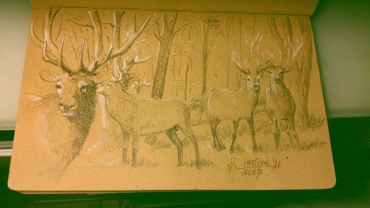 Deers in wood - ChristianUrgese