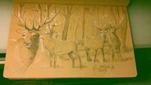 Deers in wood