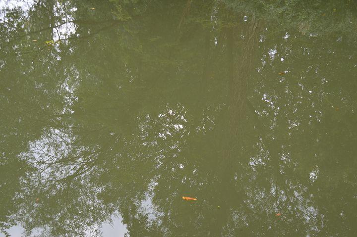 Screening on the River - Wardululu Alsaffar