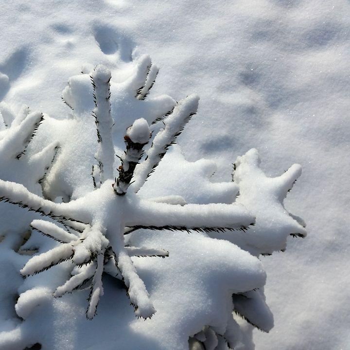 Snow blanket - feiermar