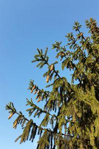 The Tree for Christmas - feiermar