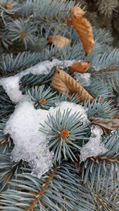 patch of snow - feiermar