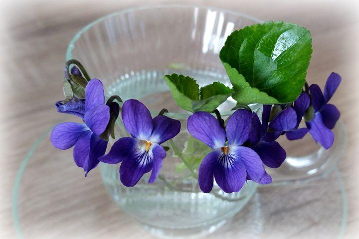 cup of violets - feiermar