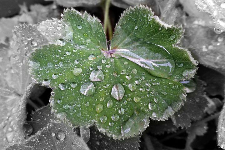 heavy rain - feiermar