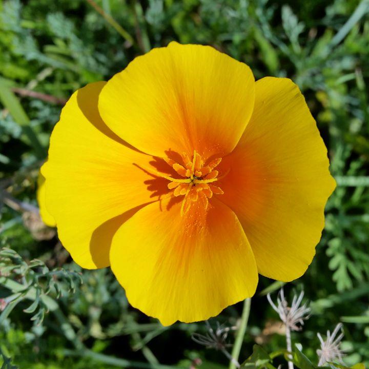 yellow of autumn - feiermar