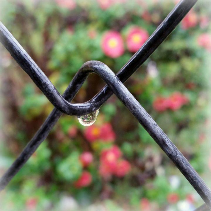 Drop of rain - feiermar