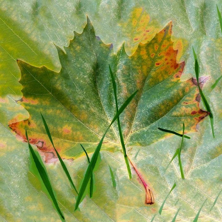 Late autumn - feiermar