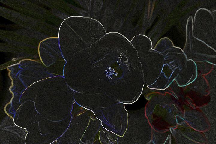 freesia flowers outlined - feiermar