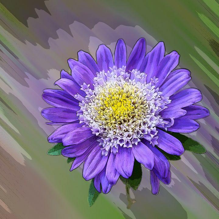 blue violet flower - feiermar