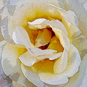 shades of white to yellow