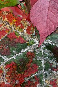 rust of autumn