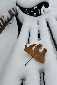oak leaf on new snow