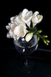 white freesia in a glass