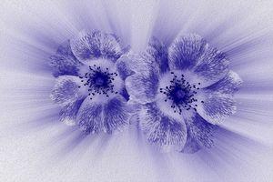 Flower in blue